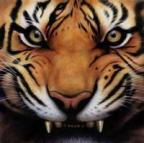 Tiger Tales's Avatar